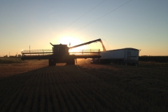 wheat-combine-sunset2