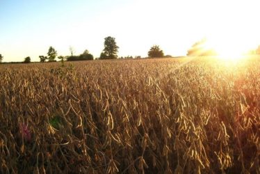 soybeans_d2af2a8c4ccc2870d4bb5aeefb16a95c